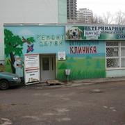 консультацию можете где найти хорошую ветеренарную клинику в томске ассоциируется